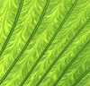 ID 3116940 | Texture of green leaf as background | 高分辨率照片 | CLIPARTO