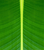 ID 3239478 | Texture of green leaf background | High resolution stock photo | CLIPARTO