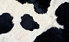 Real black and white cow hide | Stock Foto