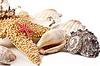 Фото 300 DPI: Набор из морских раковин