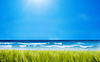 Mar y campo de hierba verde | Foto de stock