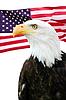 ID 3242211 | Bald eagle with American flag | 高分辨率照片 | CLIPARTO