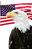 ID 3243091 | Bald eagle with American flag | High resolution stock photo | CLIPARTO