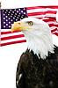 ID 3243091   Bald eagle with American flag   高分辨率照片   CLIPARTO
