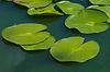 여름 하루에 물 릴리 꽃 | Stock Foto