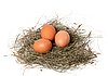 Chicken eggs in nest | Stock Foto
