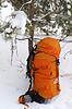 在白雪皑皑的松木背包 | 免版税照片
