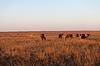 在牧场放牧的马追风   免版税照片