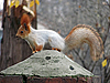 Squirrel | Stock Foto