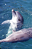 Фото 300 DPI: дельфины