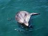 海豚 | 免版税照片