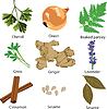 Vector clipart: set of different spices