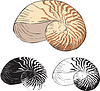 Vector clipart: oceanic isolation shell