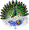 Vector clipart: peacock