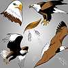 Vector clipart: eagles