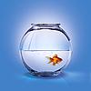Aquarium | Stock Foto