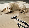 Dog on carpet | Stock Foto