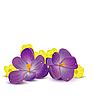 Векторный клипарт: фиолетовые цветы