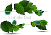 Vector clipart: green leaves