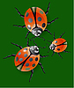 Vector clipart: Ladybug, green leaves