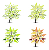Vector clipart: tree with leaves