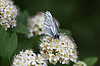 ID 3280567   White butterfly on white flower   High resolution stock photo   CLIPARTO