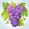 Векторный клипарт: Черный виноград