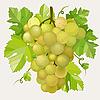 Векторный клипарт: Зеленый виноград