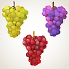 Vector clipart: Three cluster of grape