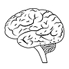 Векторный клипарт: Мозг