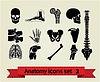 Set von anatomischen Icons