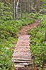 Photo 300 DPI: Footpath the leader in pine wood