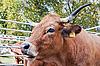 ID 3133690 | Krowa | Foto stockowe wysokiej rozdzielczości | KLIPARTO