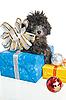 Szczeniak pudel prezenty świąteczne | Stock Foto