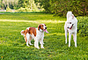 Two dogs on lawn | Stock Foto