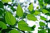Green leaves   Stock Foto