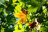 Herbst, bunte Blätter | Stock Photo