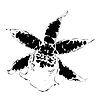 Vector clipart: orchid silhouette