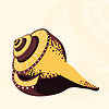 Vector clipart: Seashell