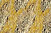 Photo 300 DPI: camouflage fabric