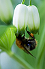ID 3150565   Bumble-bee   High resolution stock photo   CLIPARTO