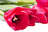 Red tulips | Stock Foto