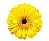 ID 3150795   Petals   High resolution stock photo   CLIPARTO