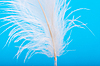 ID 3150888 | Feather | High resolution stock photo | CLIPARTO