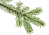 Fir branch | Stock Foto