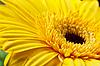 Ein Herz aus Blumen | Stock Foto