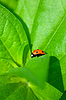 ID 3151114 | Ladybug | High resolution stock photo | CLIPARTO