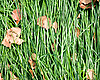 Laid grass | Stock Foto