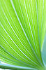 ID 3151126 | Green leaf background | High resolution stock photo | CLIPARTO