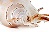 Sea shell | Stock Foto